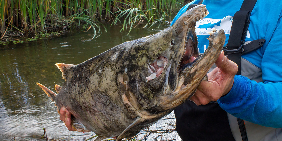 POSTPONED! BioBlitz and Salmon Watch on Los Gatos Creek