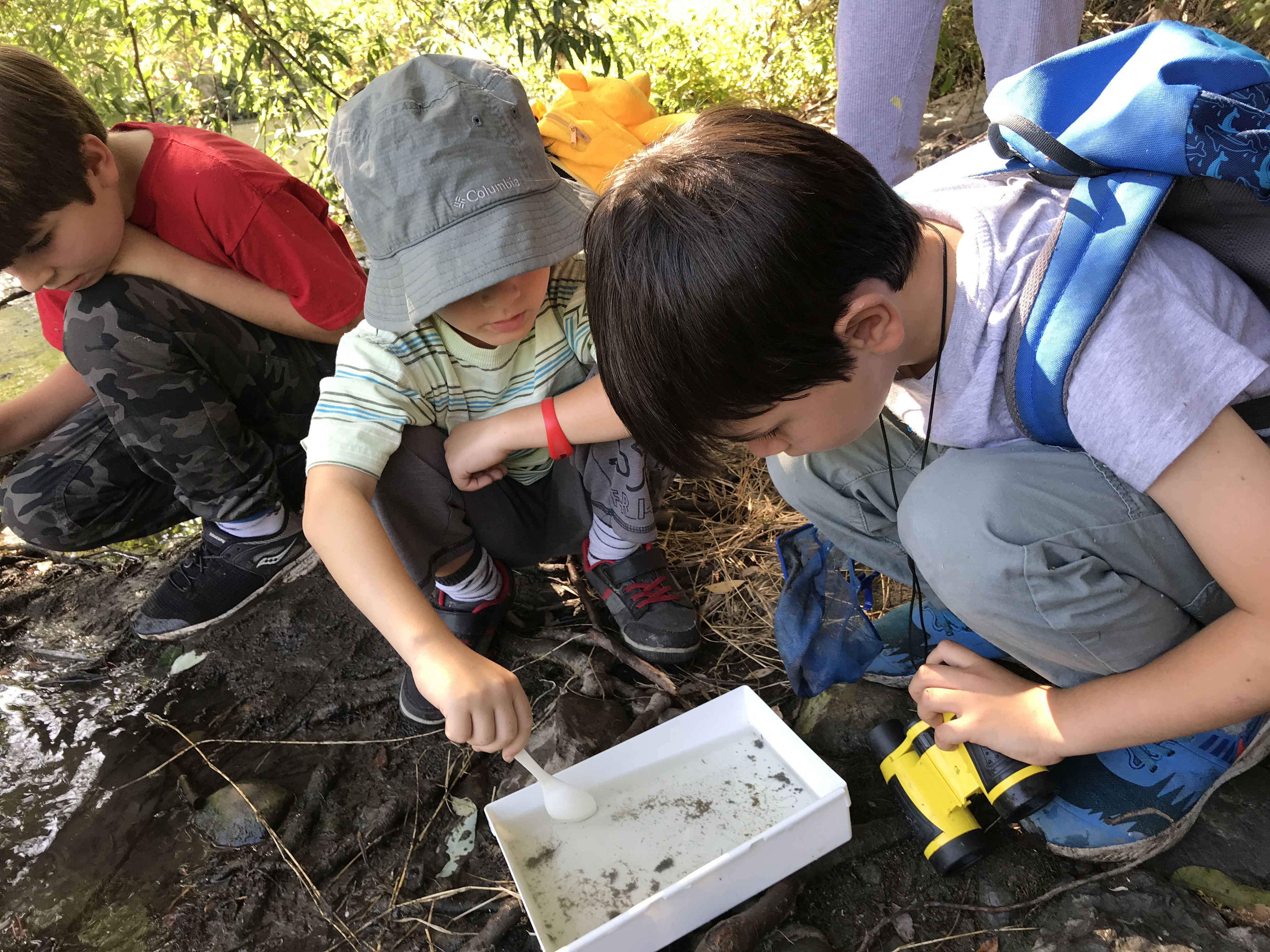 looking at aquatic insects