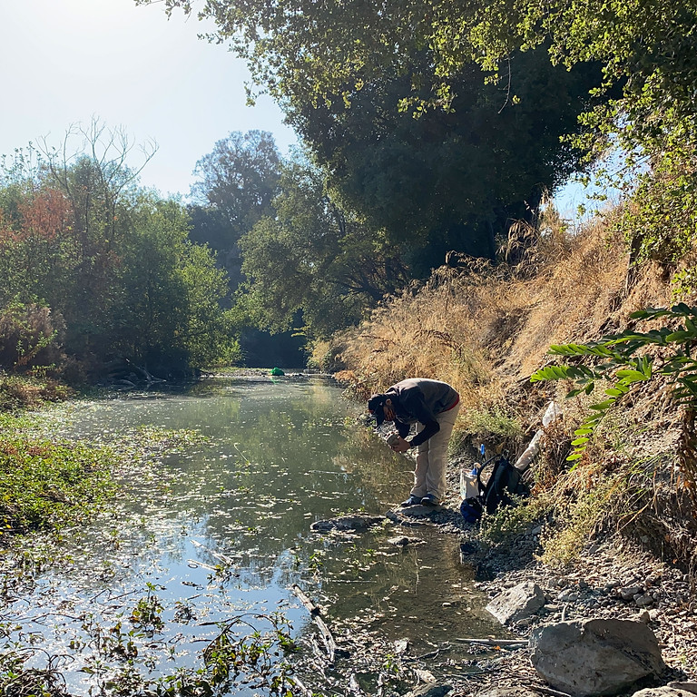 BioBlitz and Salmon Watch on Los Gatos Creek --- CANCELED!!