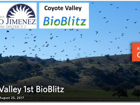 BioBlitz Club 4th anniversary!