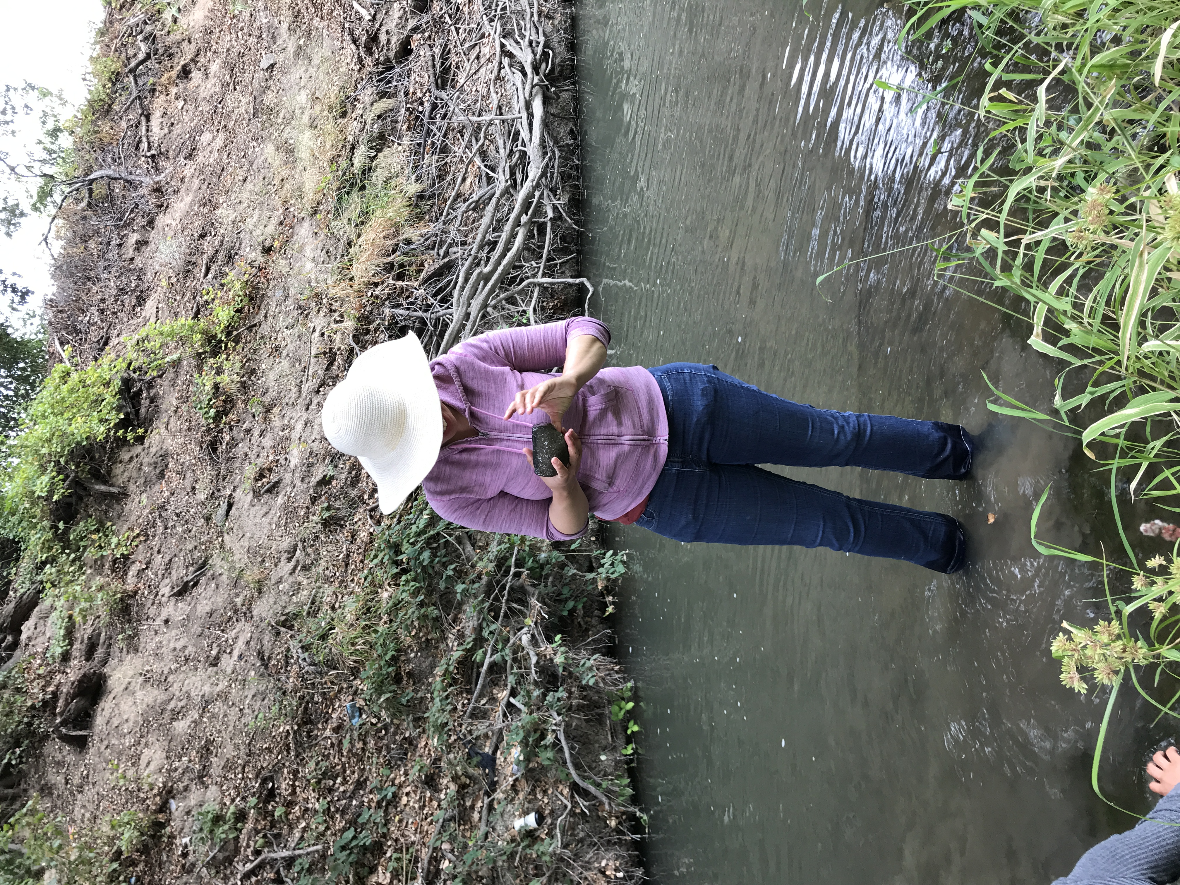 looking for aquatic insects
