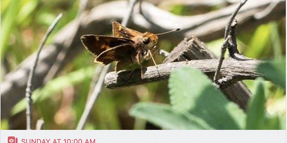 Explore nature in your yard with iNaturalist