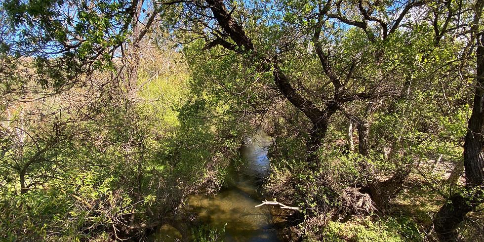 Virtual Creek Walk - Coyote Valley