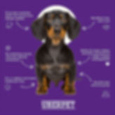 Uberpet why feed raw infographic.jpeg