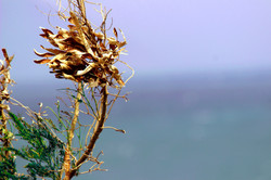 windy dry flower.jpg