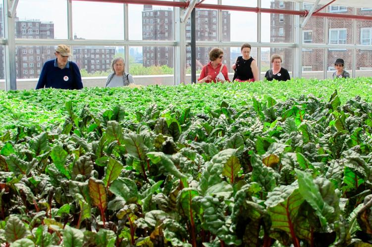 Bronx-rooftop-farm-sky-vegetables-arbor-