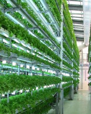 hydroponics2_0.jpg