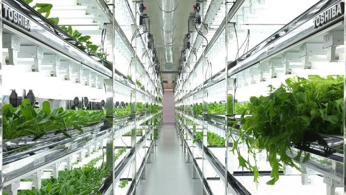 toshiba-indoor-farm.jpg