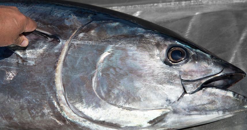 tuna on slide edited_3.jpg