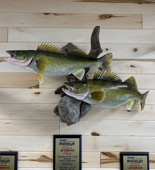 Walleye replica fish mount