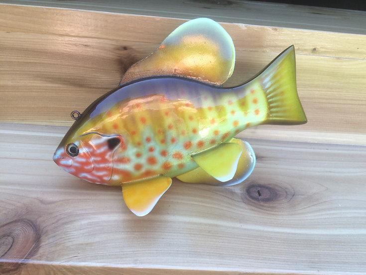 Pumpkinseed Sunfish-PKS