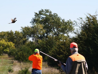 South Dakota Pheasants; Arkansans convene for a storybook shotgunning adventure