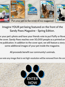 Put Your Pet on the Cover of Sandy Paws print edition