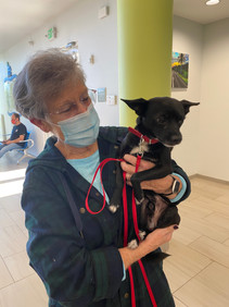 AdventHealth Celebrates Heart Health Month by Paying Pet Adoptions at HHS