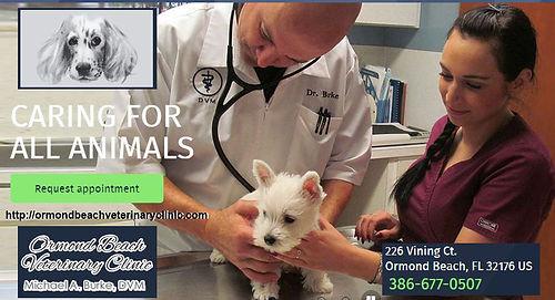 dr burke ad copy.jpg
