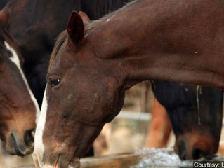 Moving of 1,000 wild horses in South Dakota clears hurdle
