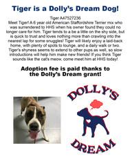 tigerdollydreamdog4-16-2021 copy.jpg