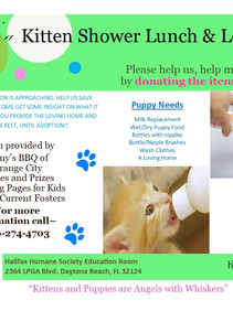 Kitten and Puppy Foster Lunch and Learn