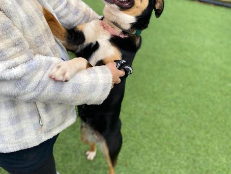 HHS Volunteer Saves Dog While Visiting Georgia