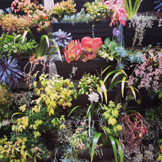 succulentsectoplasm.jpg