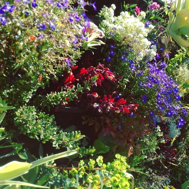 ectoplasm vertical gardens