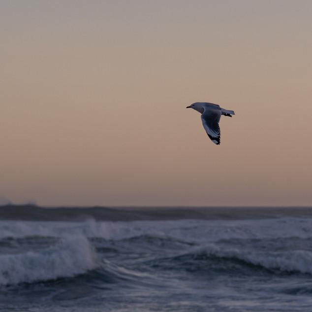 Sandfly Bay, New Zealand