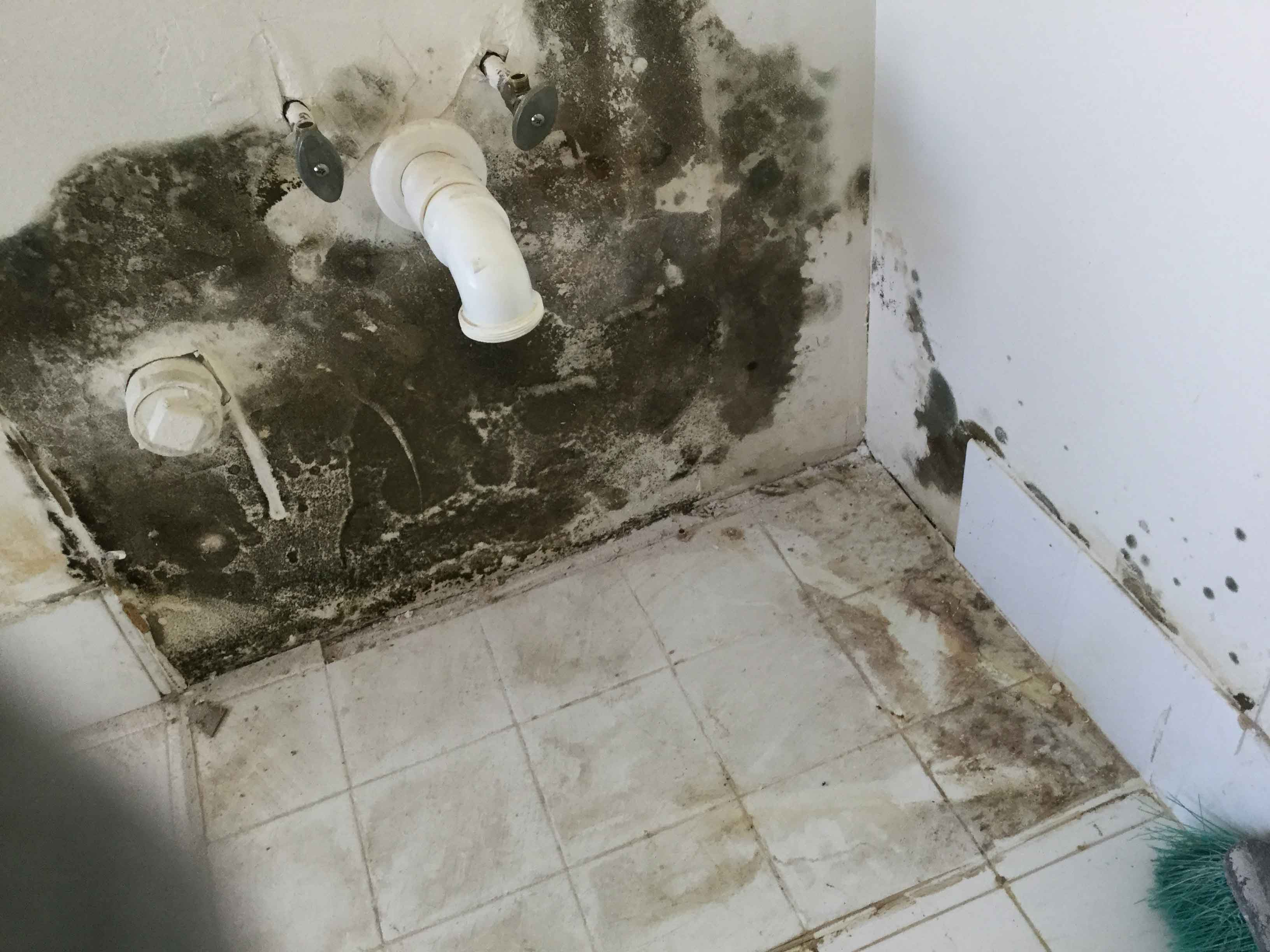 Reel-Contractors-Toilet-Badroom-Back-Wall-Mold-Damage-Specialists-Pembroke-Pines-Fl-Company