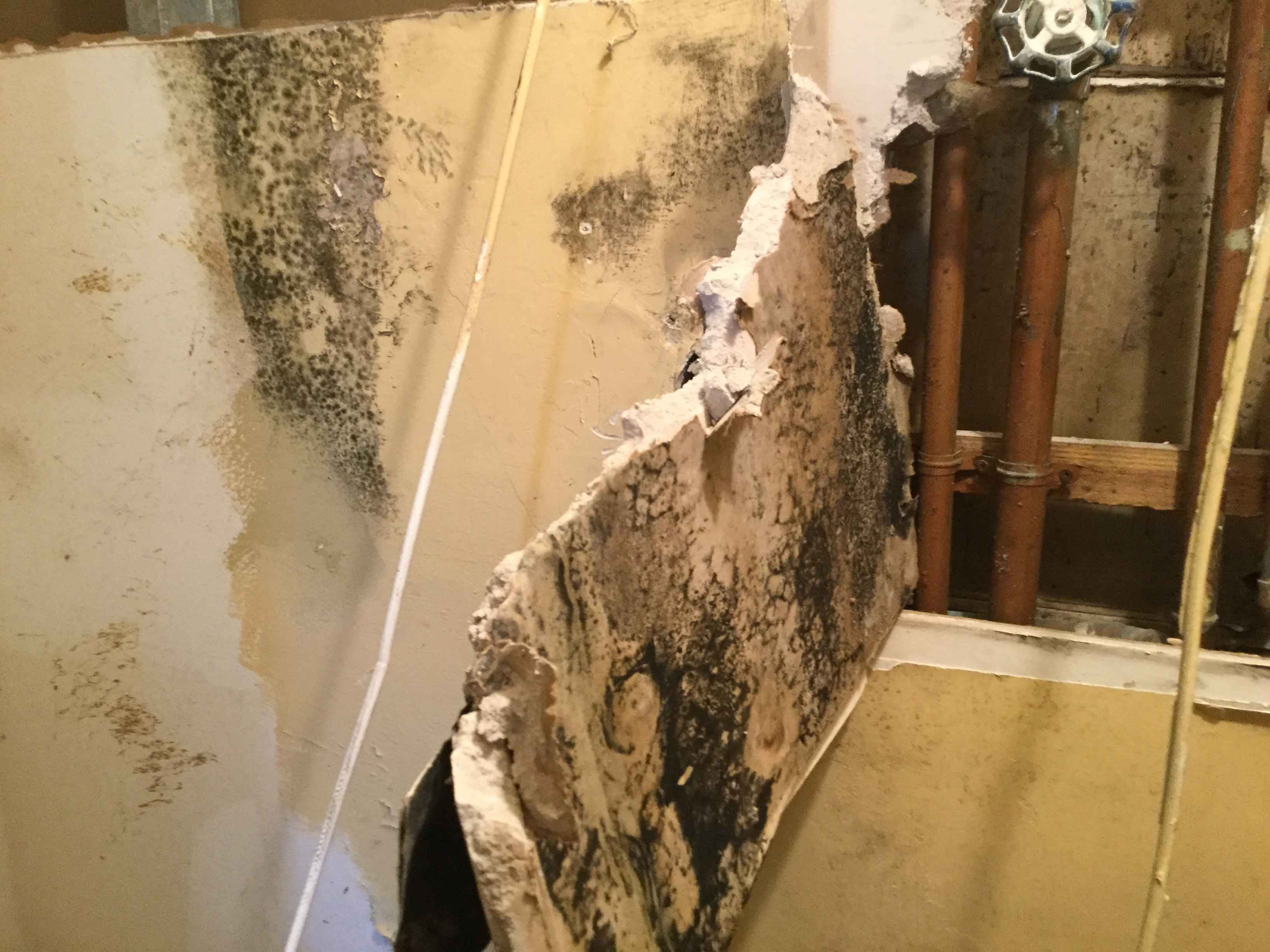 Reel-Contractors-Wall-Black-Mold-Specialists-Pembroke-Pines-Fl-Company