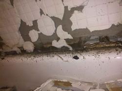 Reel-Contractors-Bad-Tub-Black-Mold-Damage-Experts-Pembroke-Pines-Fl-Company
