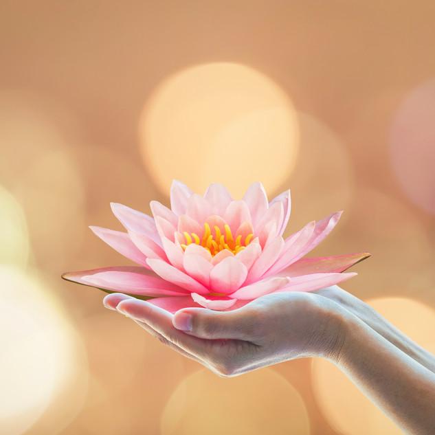 Lotus and light