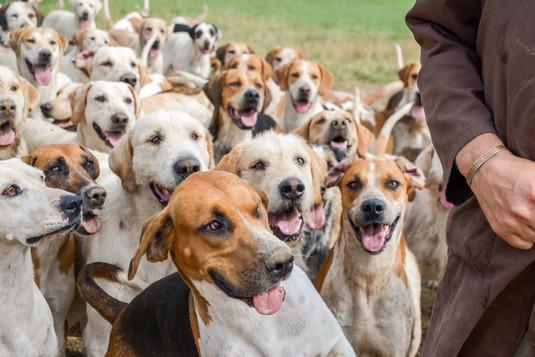 Anna Bruce. hounds 2019 (33 of 55).jpg