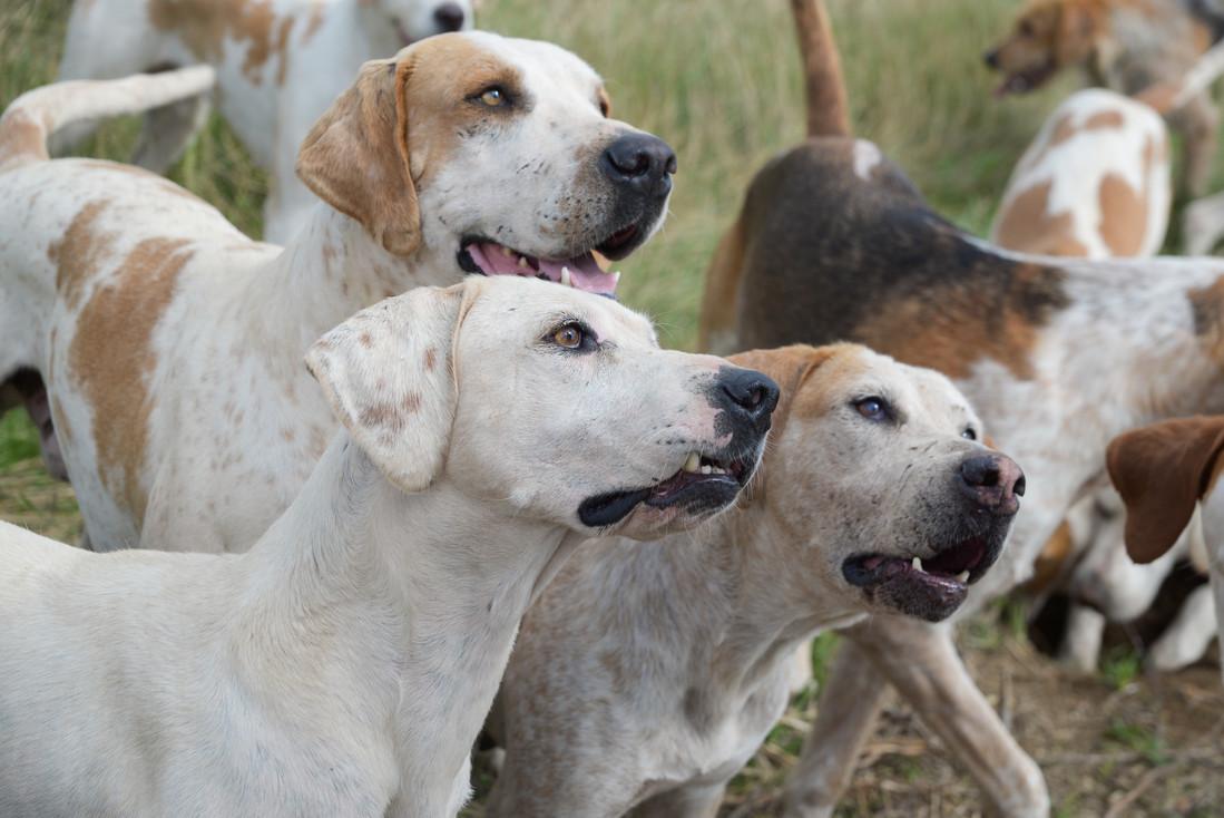 Anna Bruce. hounds 2019 (20 of 55).jpg