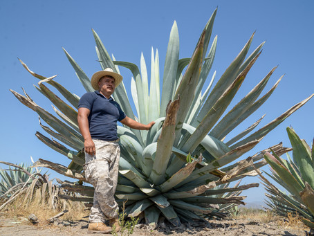 Pictures of pulque and a piece on Istmeño Cuisine