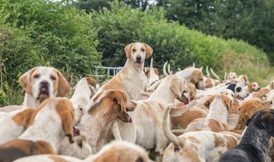 Anna Bruce. hounds 2019 (12 of 55).jpg