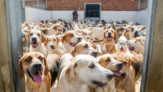 Anna Bruce. hounds 2019 (42 of 55).jpg