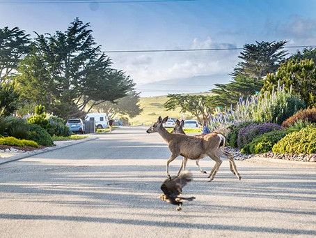 California twilight zone
