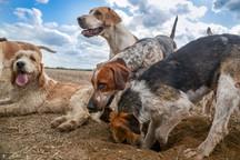 Anna Bruce. hounds 2019 (31 of 55).jpg