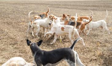 Anna Bruce. hounds 2019 (27 of 55).jpg