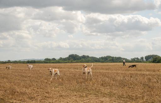 Anna Bruce. hounds 2019 (14 of 55).jpg