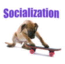 Socialization.jpg