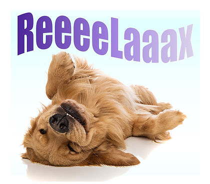 """Cute Golden Retreiver puppy on his/her back, totally relaxed. """"ReeeeLaaax"""""""