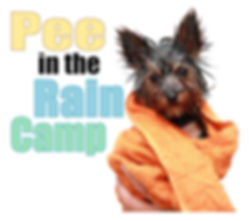 """Potty Training - Wet Yorkie wrapped in a towl. """"Pee in th Rain Camp"""""""