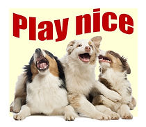 BrainyDog-programcover-Play Nice.jpg