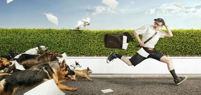Dogs chasing carrier