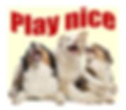 "My dog plays too rogh. Three happy australian shepherd puppies. ""Play nice"""