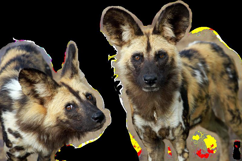 Dogs%20gone%20wild%20-%20Brainy%20Dog_ed
