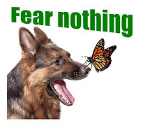 """""""Fear nothing"""" Suprised German Shephard with Monarch Butterfly on his/her nose"""