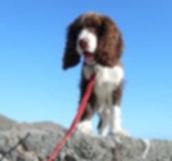 Charlie Rock Climbing.jpg