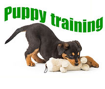 Puppy training.jpg
