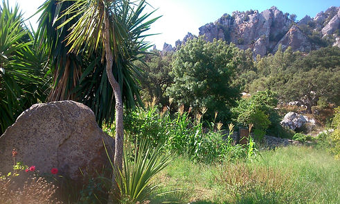 Detalle-del-jardin-y-huerto_edited.jpg